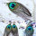 12x Ohranhängerpaar Pfauenfeder XL ca. 15 x 6 cm
